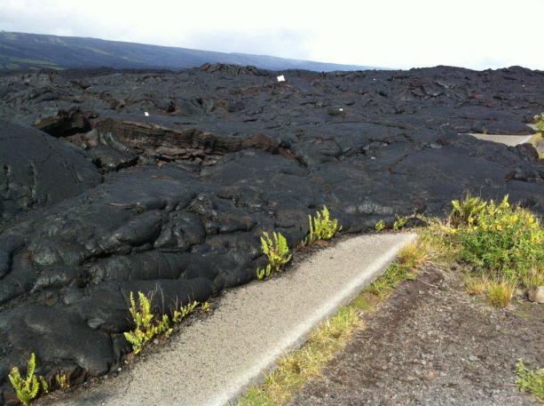 hawaii2012 033