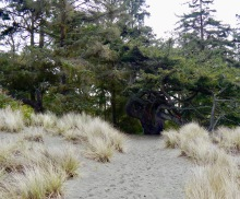 Trail to Giant Douglas Fir